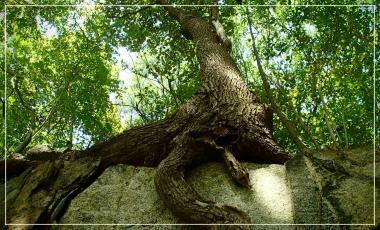 Talence / les arbres / expo