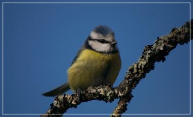 Talence / Le chant des oiseaux / conférence