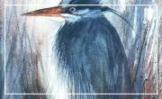Mercredi 10 / 10: un oiseau, des oiseaux