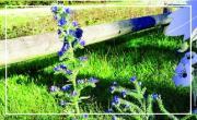Herbes folles et nature sauvage au cœur de la ville