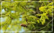 A la découverte des arbres à remarquer du parc Séguinaud-Panoramis