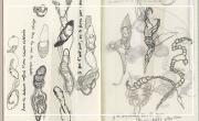 Bérénice Constans: Livres-Cahiers