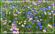 Dans les jardins et dans les prés / Josianne Millot