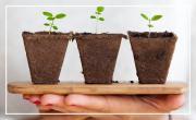 Adopte une plante