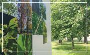 Guide des arbres à remarquer