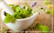 L'homme et les plantes médicinales