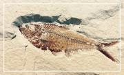 L'Aquitaine, d'il y a 30 millions d'années à aujourd'hui