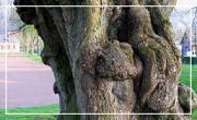 L'identité des arbres de notre patrimoine