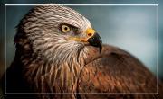 Atelier nature: les oiseaux