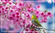 Le printemps des sens- La vue