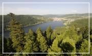 Vosges, l'appel de la forêt